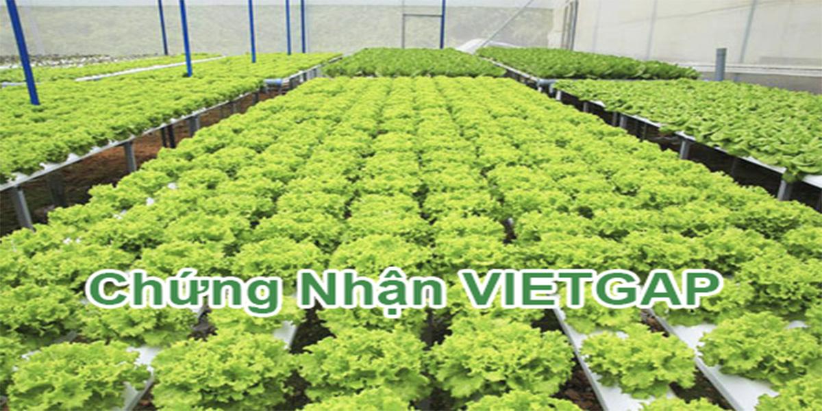 Tiêu chuẩn vietgrab trong trồng trọt là gì