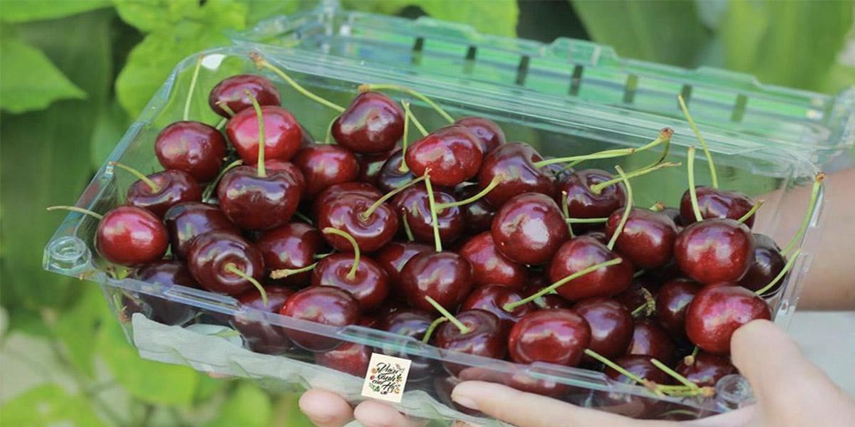 Hộp đựng trái cây là gì