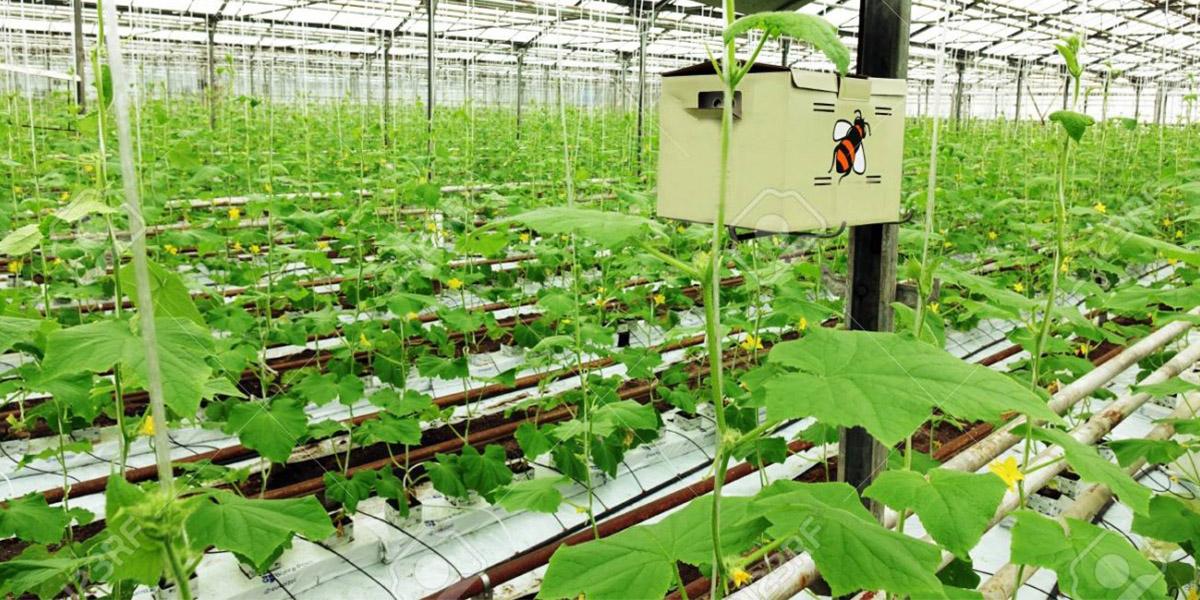 Ưu điểm của màng phủ nông nghiệp